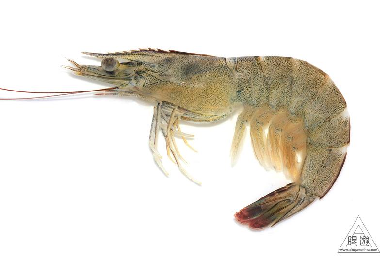 バナメイエビ (Whiteleg Shrimp...